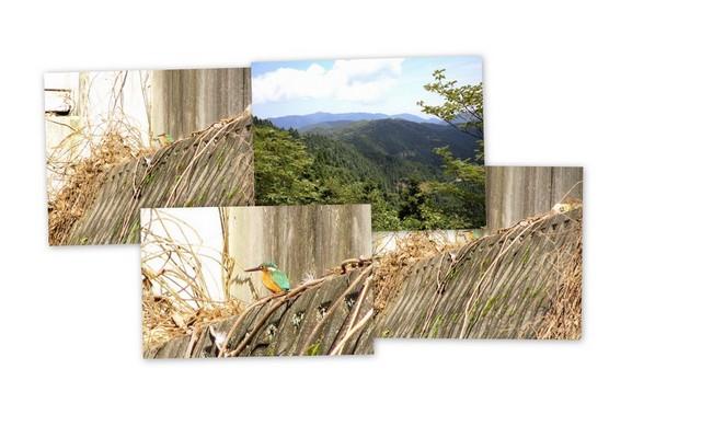 大悲山とカワセミ.jpg